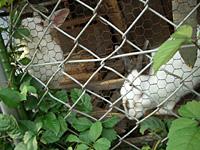 トーマス横のウサギ小屋